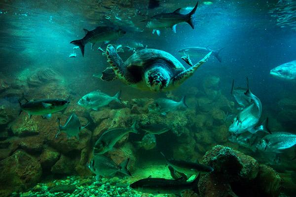 Aquarium von Elba